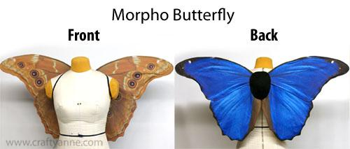 medium_morpho