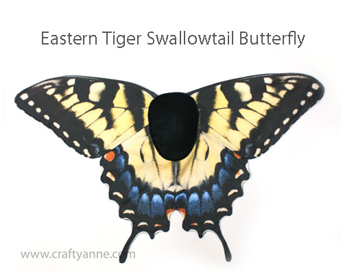 medium_tigerswallowtail